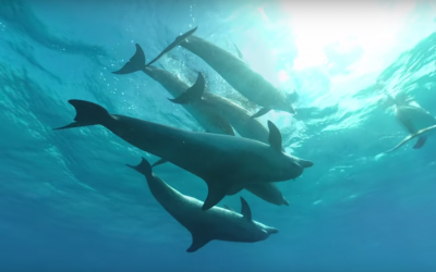 Swimming with dolphins in Virtual Reality