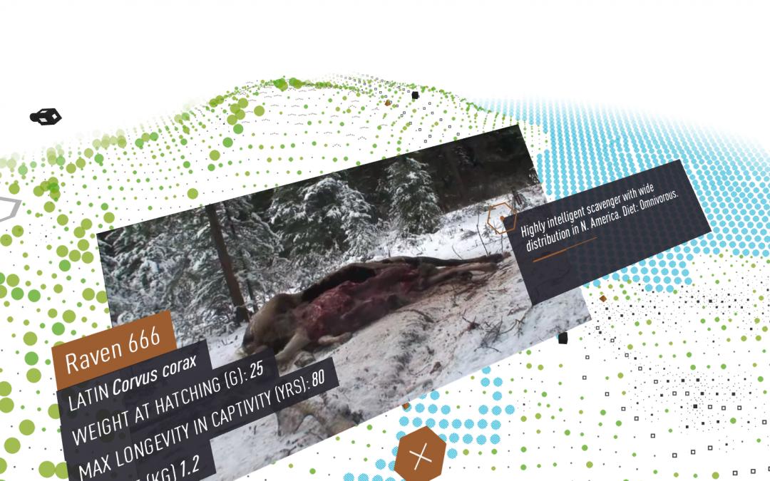 Bear 71 a 360 virtual reality interactive webvr documentary